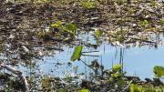 La conservation des zones humides : une priorité