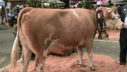 La Place du Village : Autour de la foire de bétail des Crozets (Suisse)