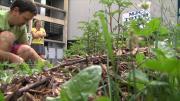 La série de la rédaction :  Le jardinage collaboratif épisode 1