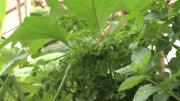 Des jardins partagés au Perrier à Annemasse