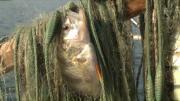 2014, année faste pour les pêcheurs du Lac Léman
