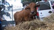 Ferme des 1 000 vaches : La Confédération Paysanne de Savoie soutient son porte-parole