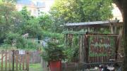 La série de la rédaction :  Le jardinage collaboratif épisode 2