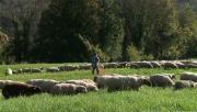 La Place du Village : Rencontres avec un berger à Cormand