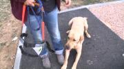 Zoom sur une école de chiens-guides