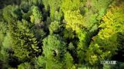Documenterre : La forêt en Pays de Savoie