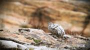 Documenterre : le réchauffement climatique dans les Alpes (2)