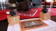 Agora -  les truffes noires du Tricastin