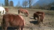 La Place du Village : Rencontres à La Bauche