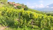 La série de la rédaction : les Vins de Savoie Episode 3