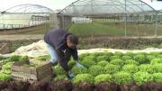 La série de la rédaction : État des lieux chez les Jeunes Agriculteurs épisode 3