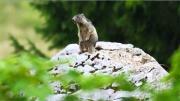 La place du village : A la découverte de la faune des Aravis