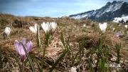 Documenterre : le réchauffement climatique dans les Alpes (1)