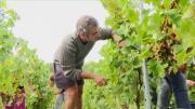 La série de la rédaction : les Vins de Savoie