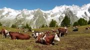La Place du village : Alpage et refuge Bertone à Courmayeur (Vallée d'Aoste)